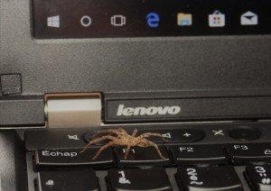 L'araignée s'échappe